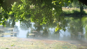 Summer Drought Greenway Murfreesboro