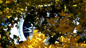Clock Fall Trees Murfreesboro Public Square Fall 2012 Images