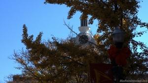Clock Trees Murfreesboro Public Square Fall 2012 Images