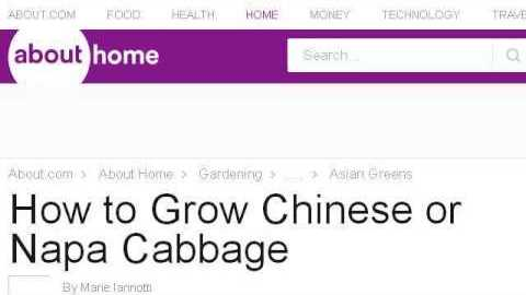 Napa cabbage How To Grow