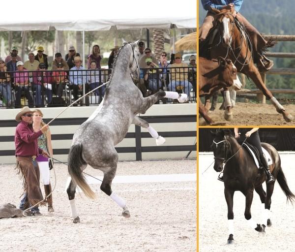 Parelli in Murfreesboro Future of Horsemanship Miller Coliseum