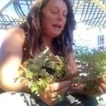 Summer purslane How To Grow