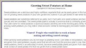 Yam How To Grow